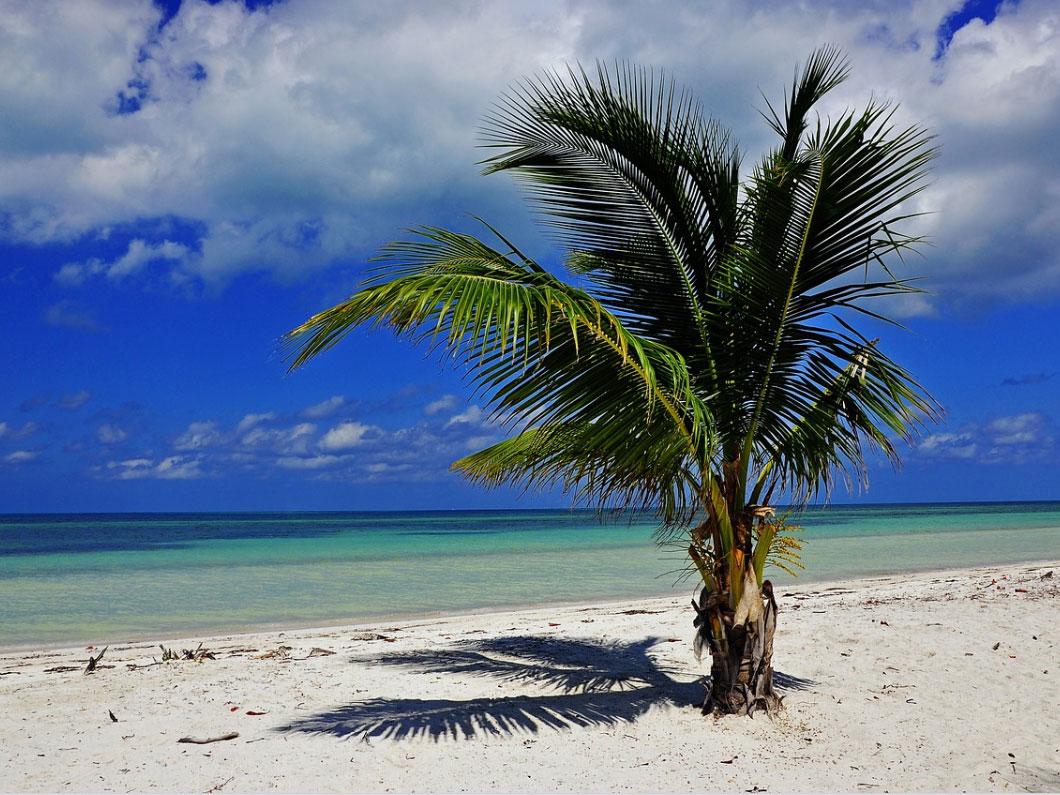 Dansacuba palmiers