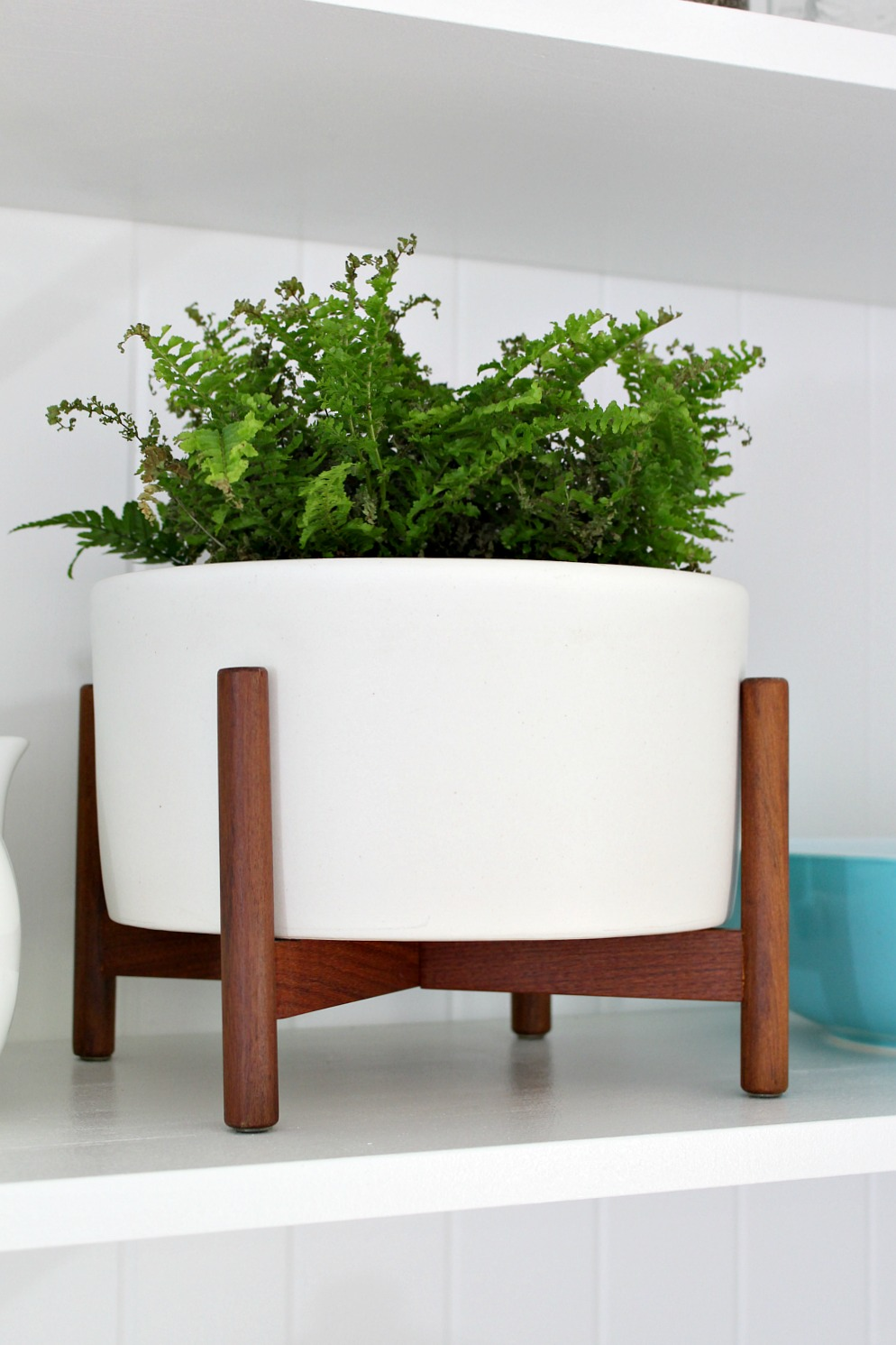 Case Study Planter Table Top Size with Fern