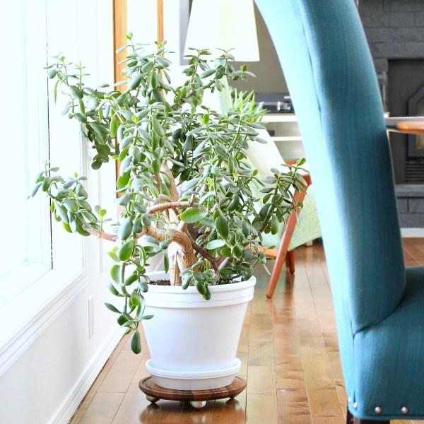 EASY DIY WALNUT PLANT DOLLY