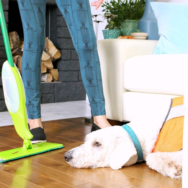 KEEP HOUSE CLEAN WITH DOGS