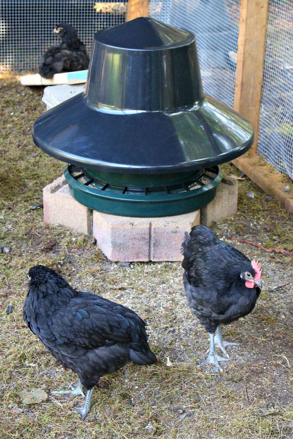 Covered Poultry Feeder