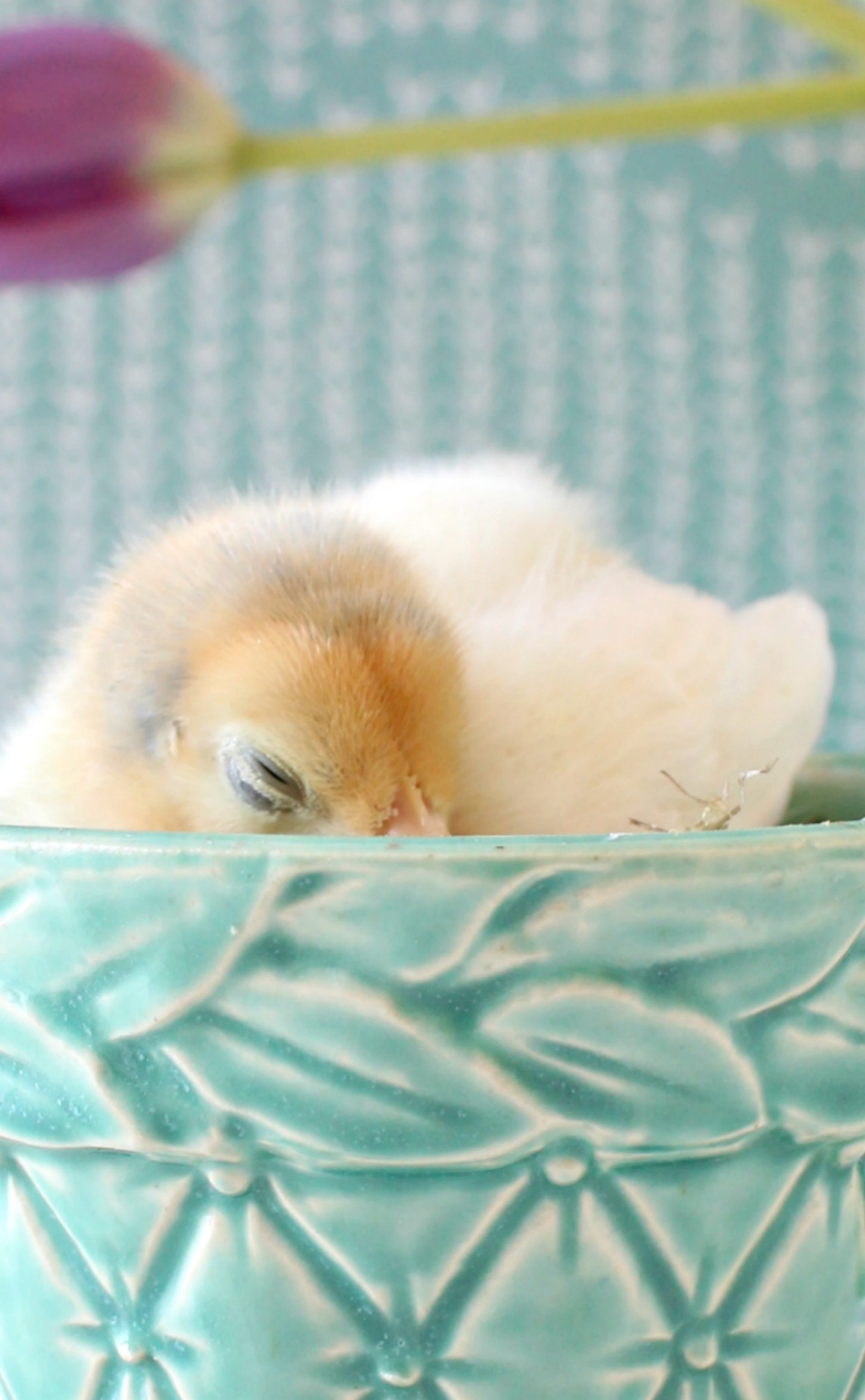 Chick Photos for Spring