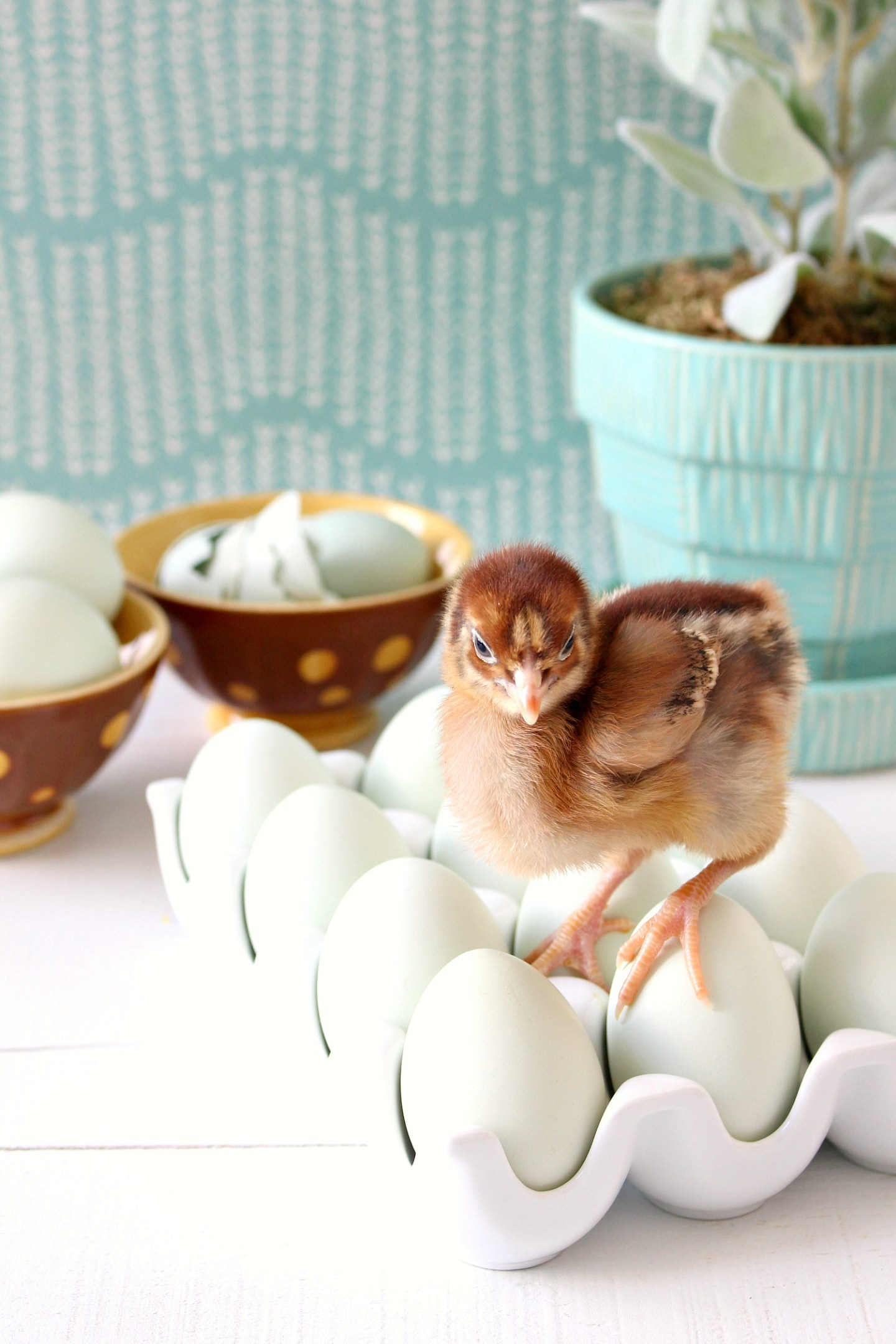 Spring Chick Photo Shoot