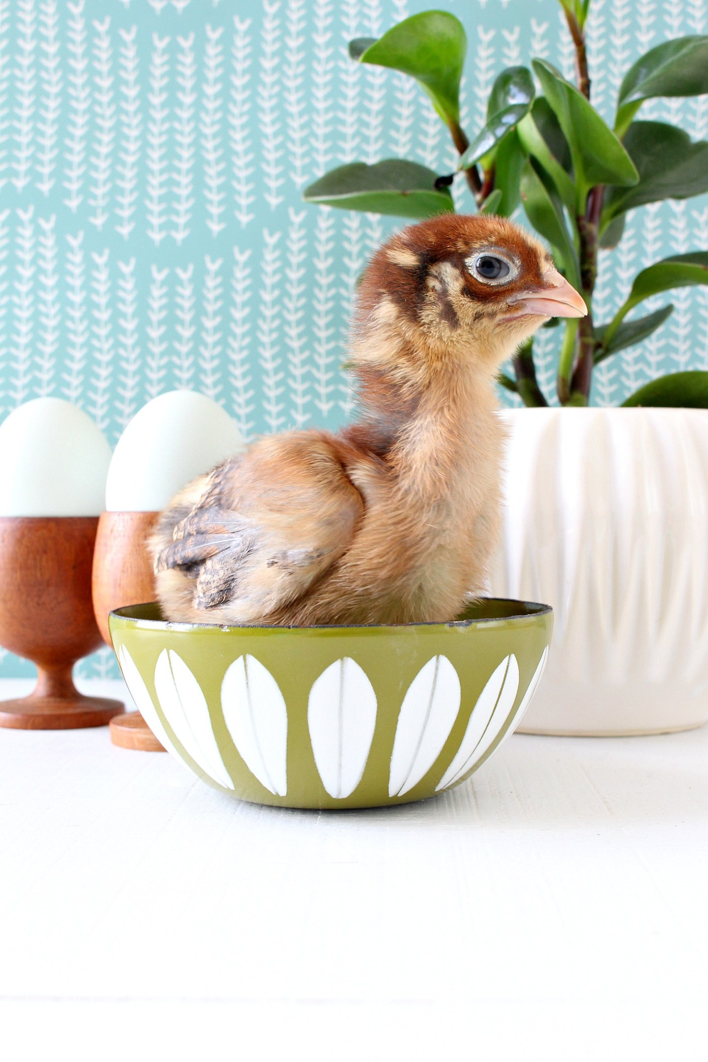 Baby Chicken in Cathrineholm Bowl