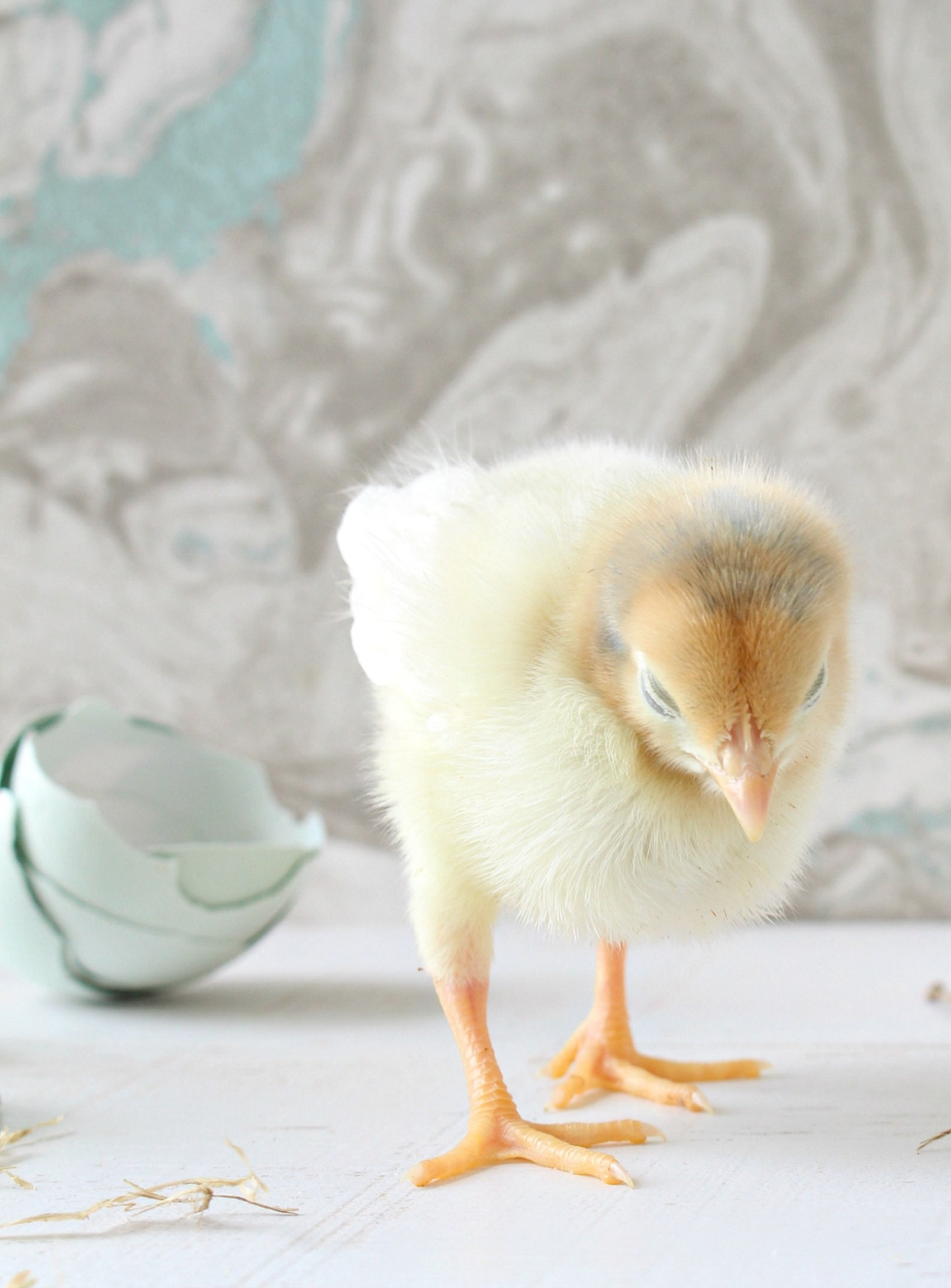 Sweet Yellow Chick Hatched Spring 2020
