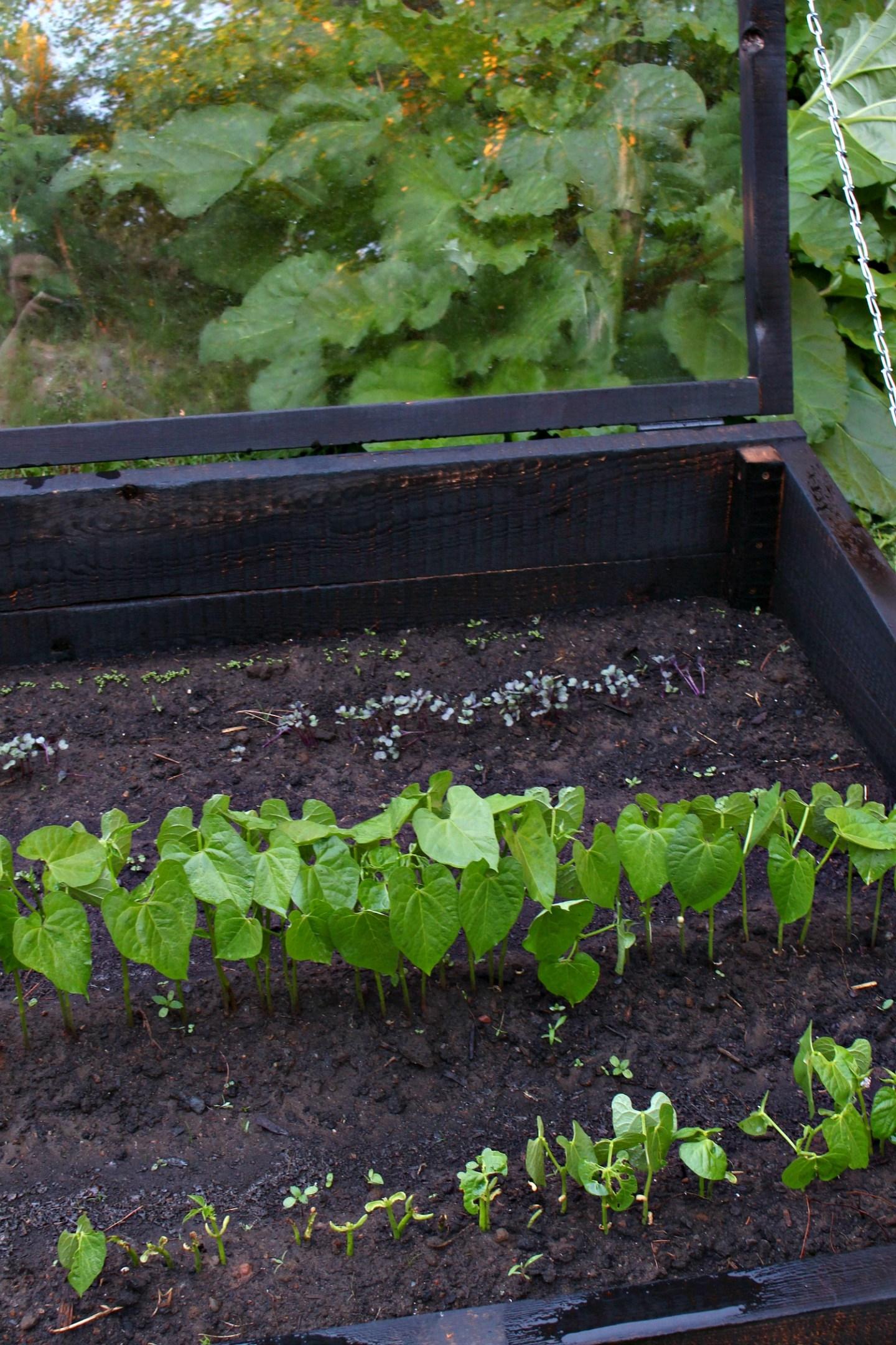 Modern Black Garden Boxes
