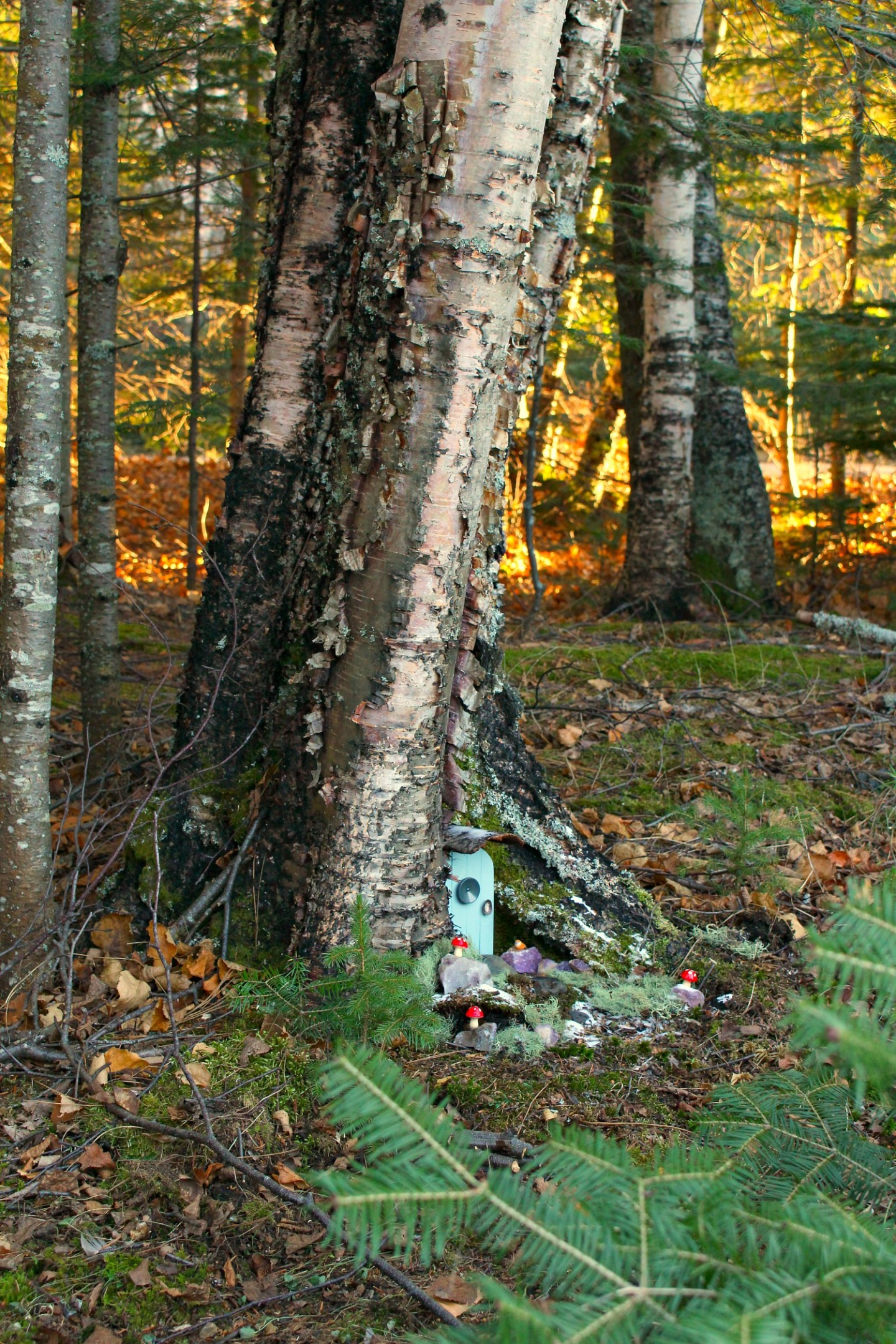 How to Make an Elf House in a Tree