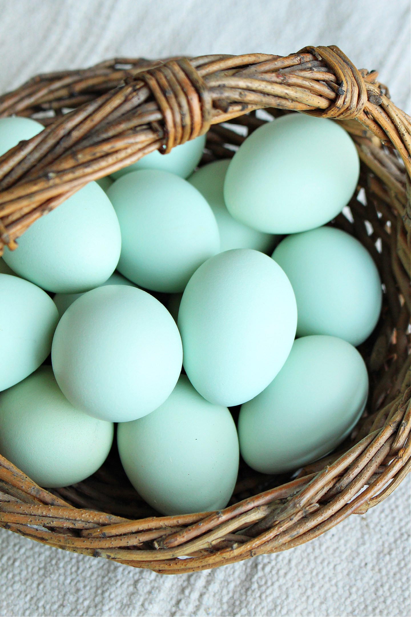 turquoise chicken eggs
