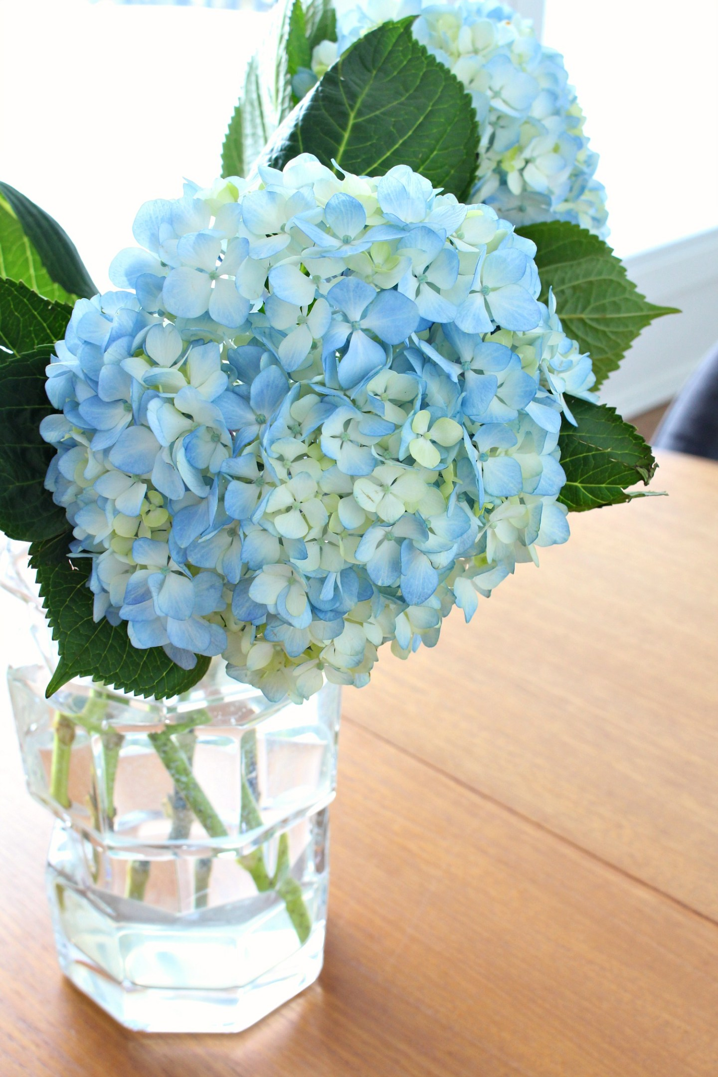 How to Prevent Hydrangeas from Wilting