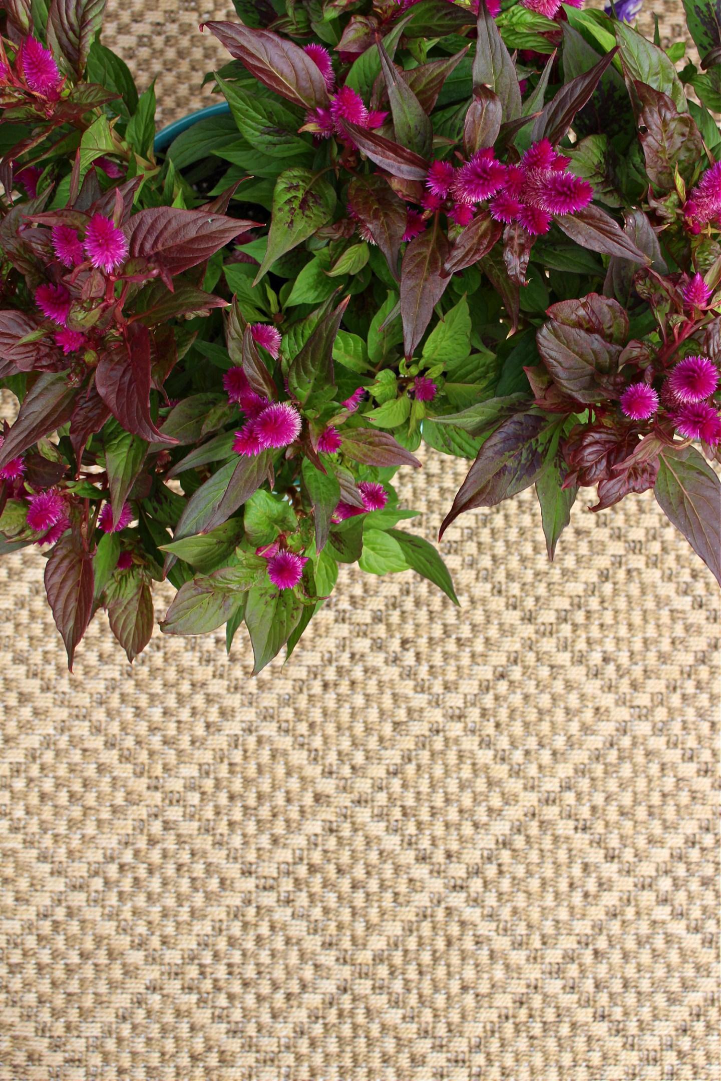 Tan Indoor Outdoor Area Rug