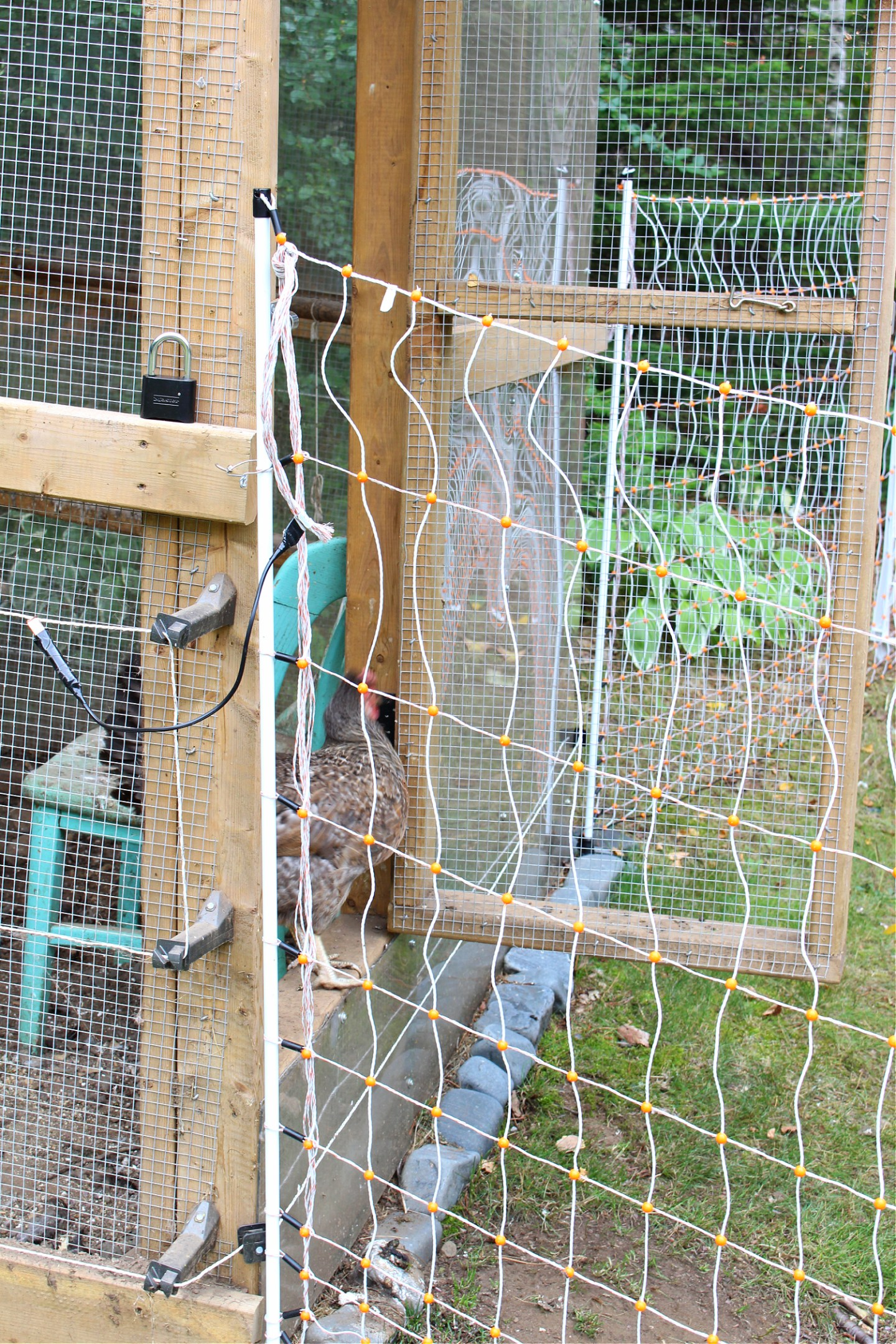 Keeping Chickens Safe Outside
