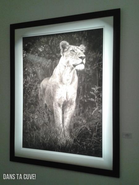 Expo : Nick Brandt à la A Galerie