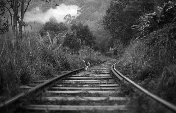 Tamara Jullien - Railway of Life