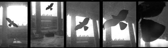Long Shot© Flore Willefert