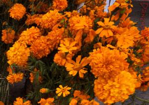 La Flor y la Muerte