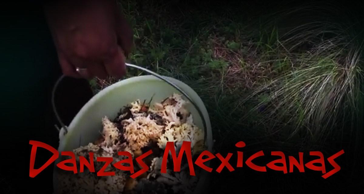 La cosecha del hongo;  El legado de un pueblo Otomí.