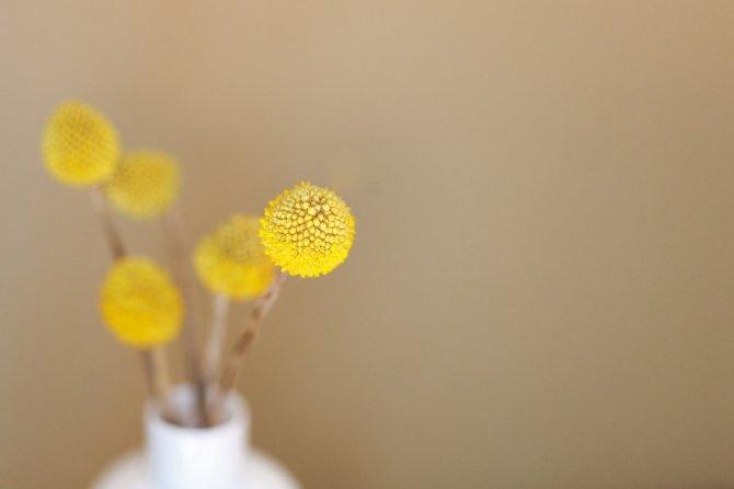 gelbe kleine Blumen in Vase vor beige Hintergrund