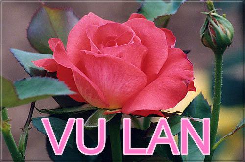 https://i1.wp.com/www.daophatngaynay.com/vn/files/images/2010/quy3/vulan_615842476.jpg