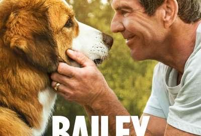 Bild aus dem Film Bailey - Ein Hund kehrt zurück