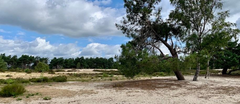 Wandelen in grenspark de Kalmthoutse Heide