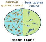 low-spermcount_s