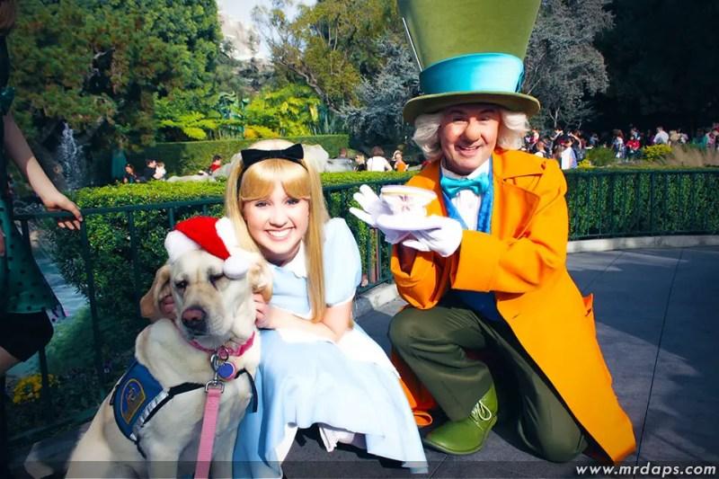 0227_CCI_Cecil_Alice_Mad_Hatter_December_09_2012