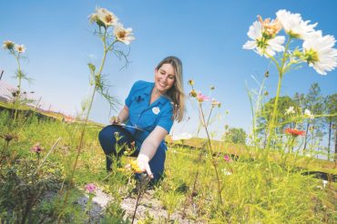 Rachel Smith from Disney's Animals, Science and Environment team helps oversee the growth of plants in the pollinator test garden at the new solar facility, providing an important habitat for insects, which are important to the ecosystem. (Olga Thompson)