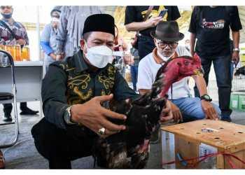 Bupati Bandung Dadang Supriatna didampingi Kepala Dinas Pertanian Tisna Umaran melihat ayam shamo disela pembukaan n Shamo Expo Indonesia Tahun 2021 di Dome Balerame, Soreang, Minggu (13/6/2021). (Foto : Humas Pemkab Bandung)