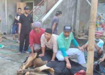 Berbeda dari taun sebelumnya, Idul Adha 1442 H tahun ini, suasana di sejumlah tempat penyembelihan hewan kurban sepi, hanya beberapa petugas penyembelih saja yang ada. Seperti di beberapa tempat di Kabupaten Bandung. Masyarakat tampaknya menyadari aturan PPKM Darurat soal kerumunan, sehingga tak lagi berbondong-bondong menyaksikan penyembelihan hewan kurban (Foto: denkur/dara.co.id)