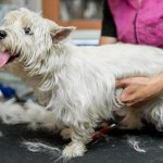 How Will A Pet Grooming On Demand App Help Your Existing Business Grow?