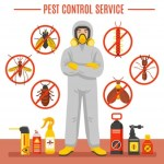 Five Mind Blowing Techniques on How to Control Pests At Home
