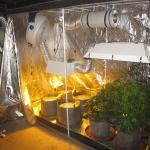 Indoor Grow Tent Set Up Guide For Indoor Gardening