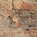 Which leopard safari camp in Jawai offers you the best experience?