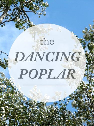 The-Dancing-PoplarWeb