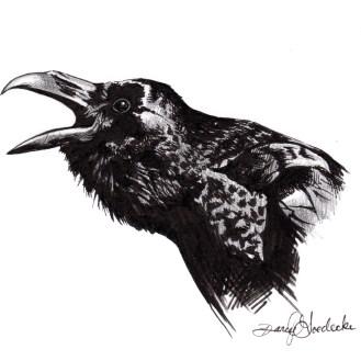 Caw - Raven Illustration by Darcy Goedecke