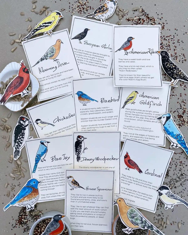 Bird Trivia Games