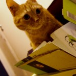 photographie my puss in a box