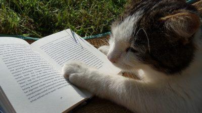 CAT, READING, HORROR, DL JUNG, DARIUS JUNG, SHORT STORY, WHEN GLINTS COLLIDE