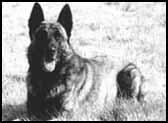 """Résultat de recherche d'images pour """"shaggy le chien defeo"""""""