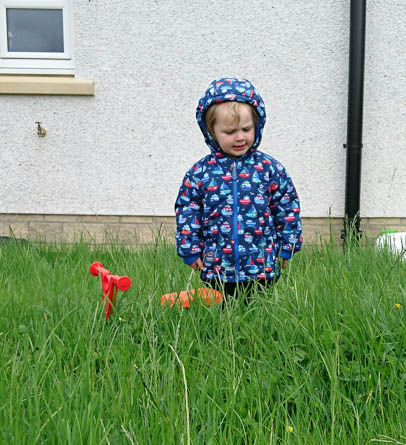 A toddlebike in some long grass