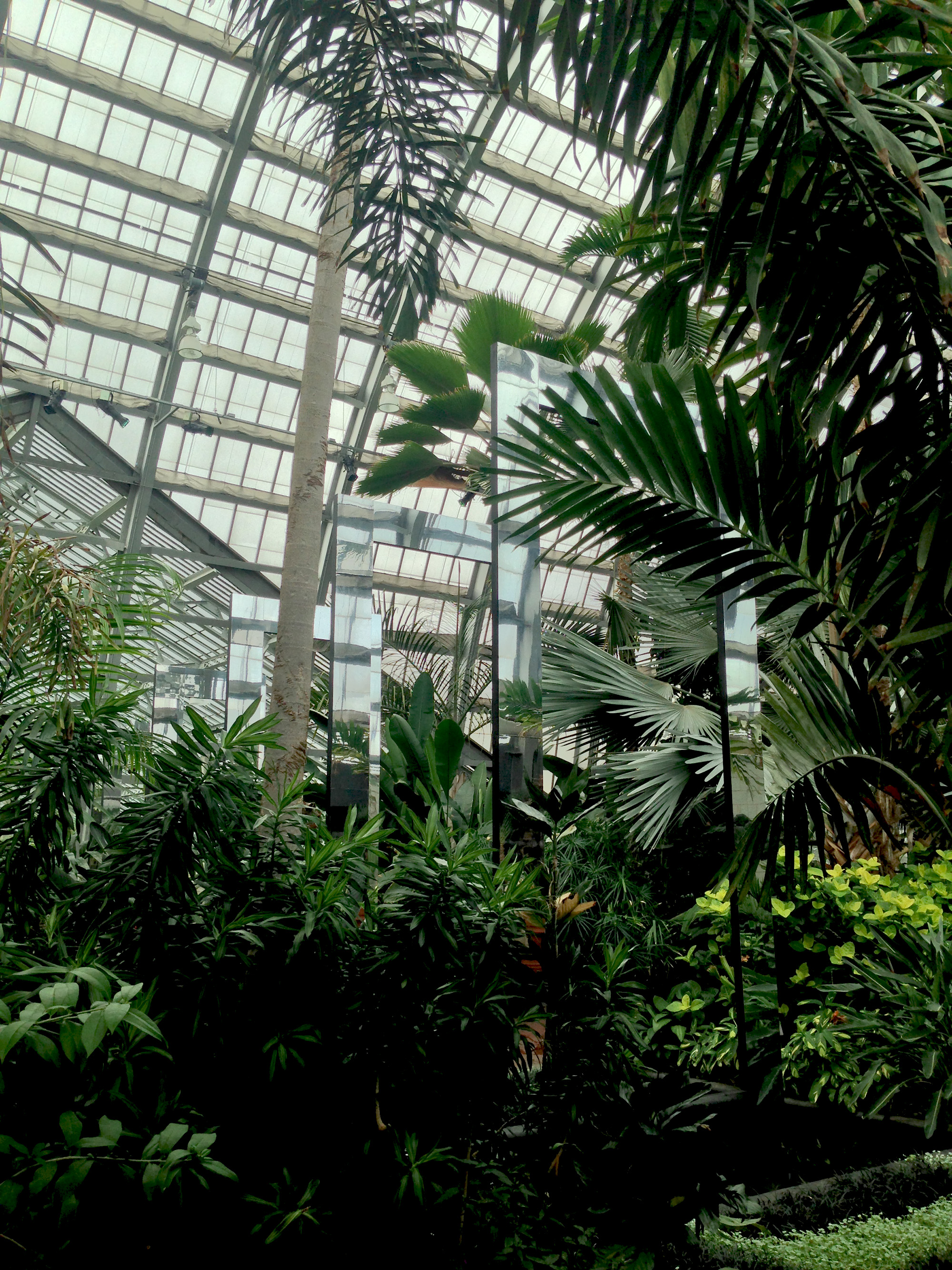 Luftwerk installation in the Palm room, Garfield Park Conservatory, Chicago Illinois