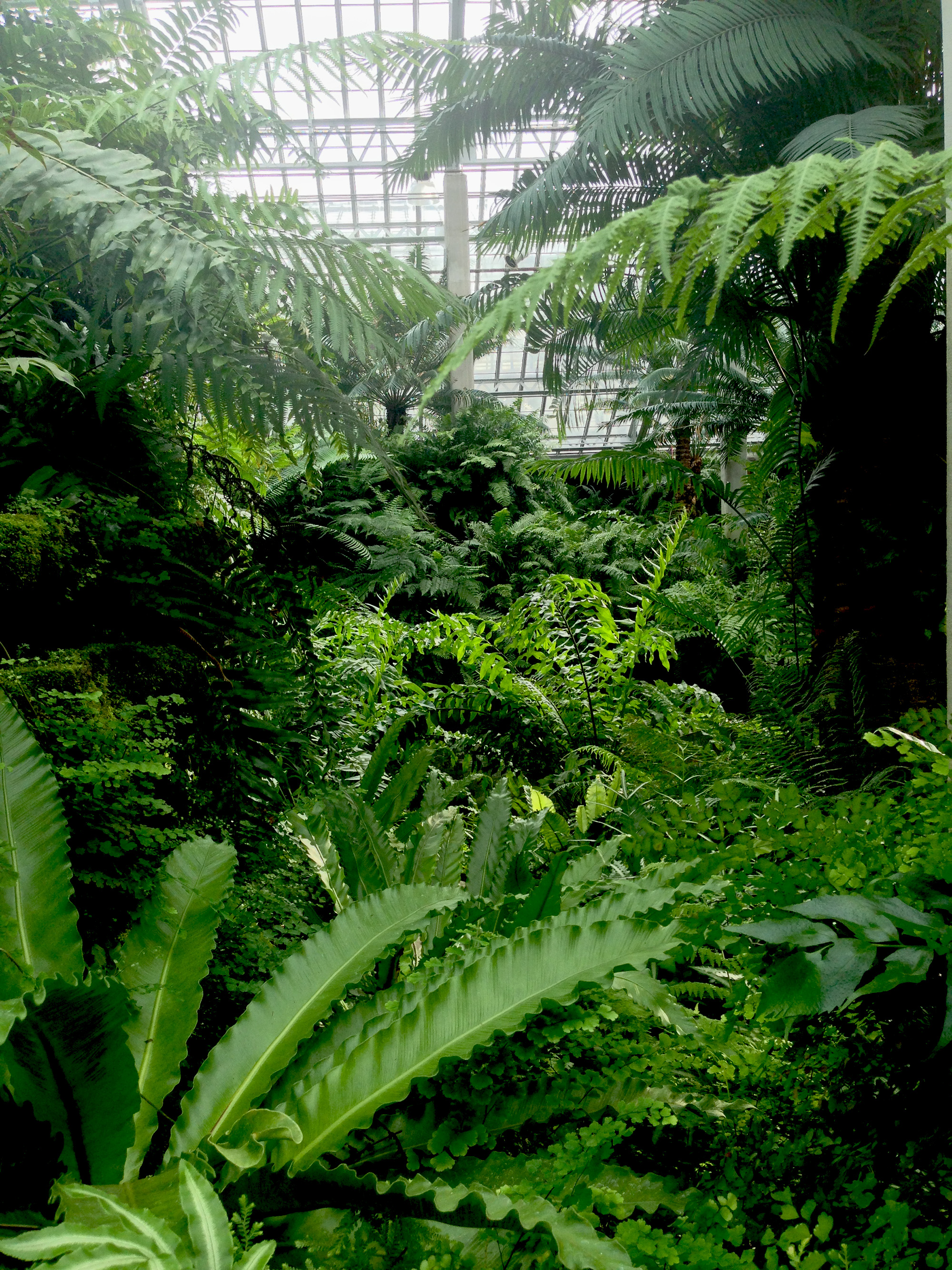 Ferm room, Garfield Park Conservatory, Chicago Illinois