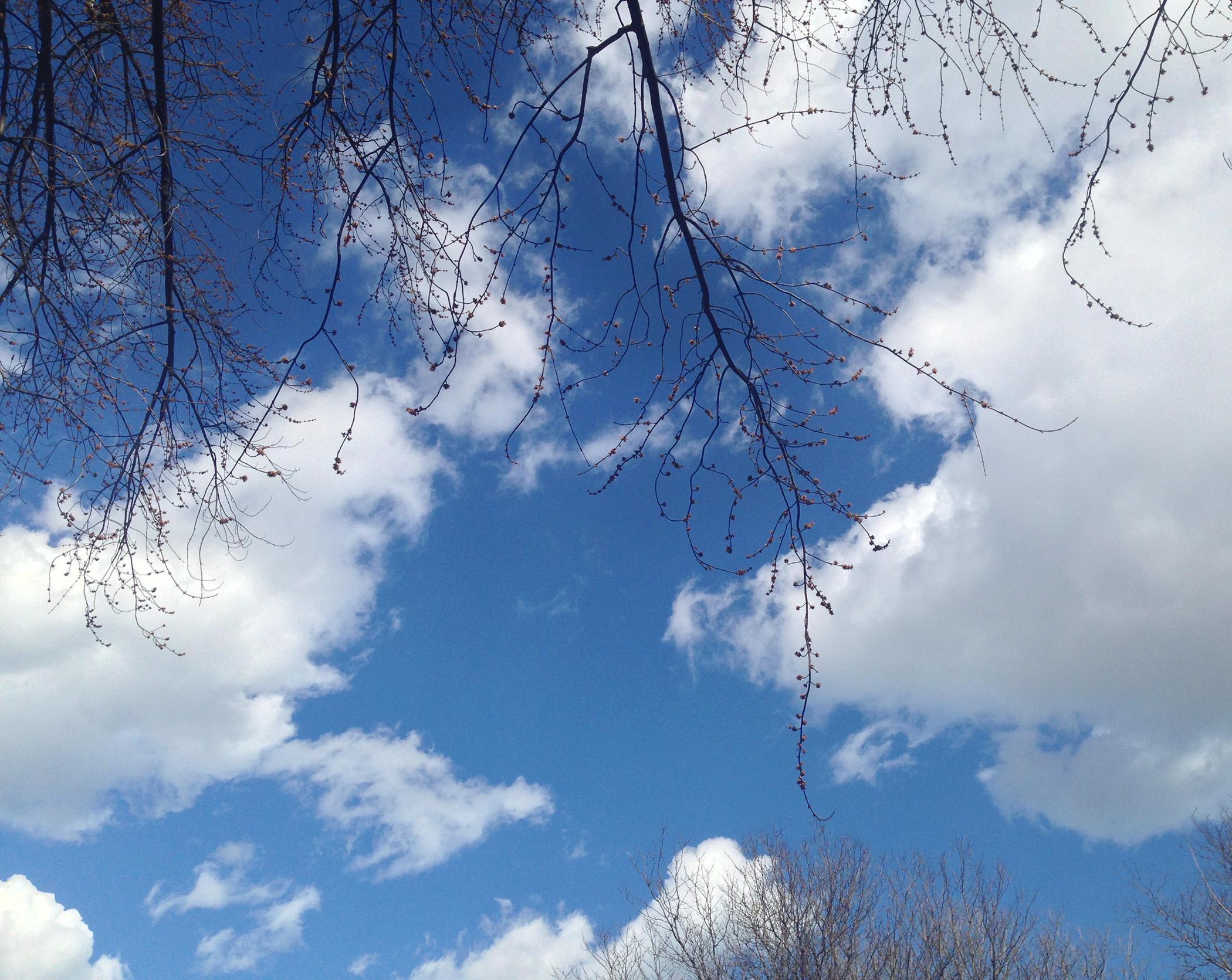 Spring sky / Darker than Green