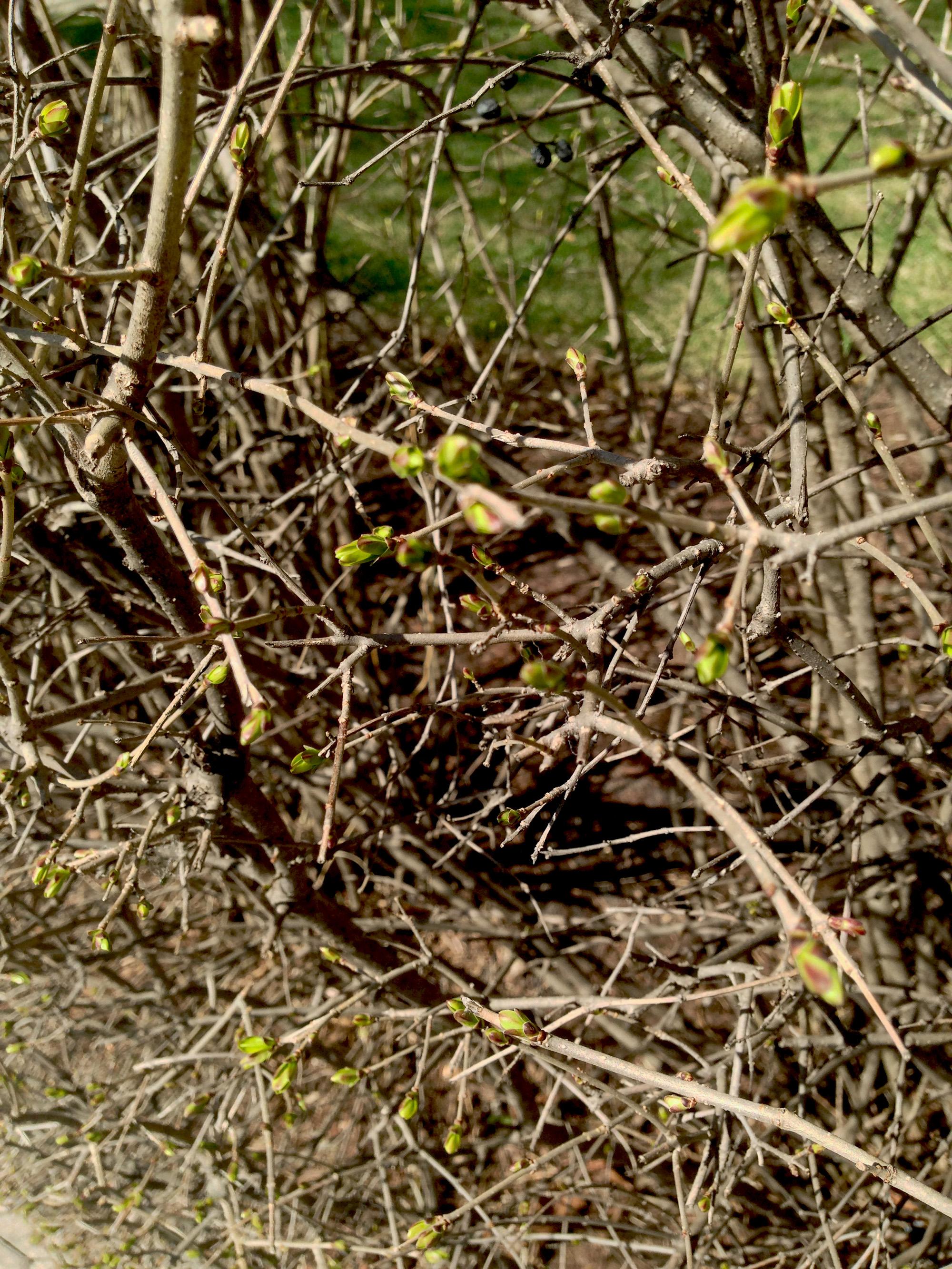 New branch growth / Darker than Green