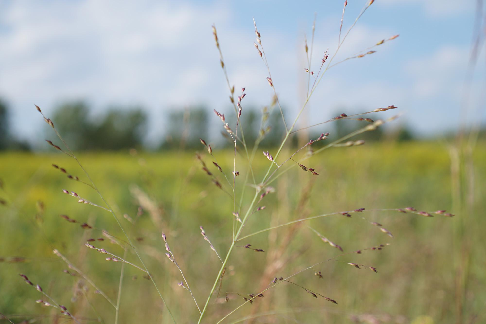 In the tallgrass prairie, Chicago Botanic Garden / Darker than Green