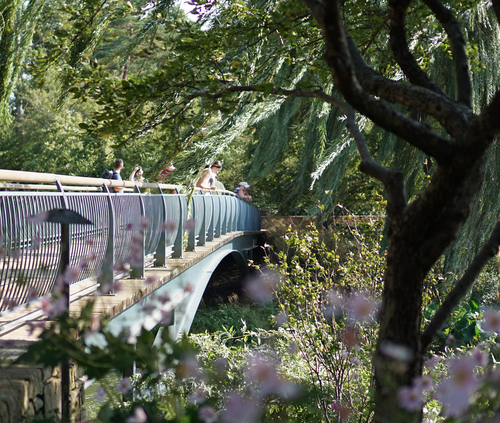 Bridge to Evening Island, Chicago Botanic Garden / Darker than Green