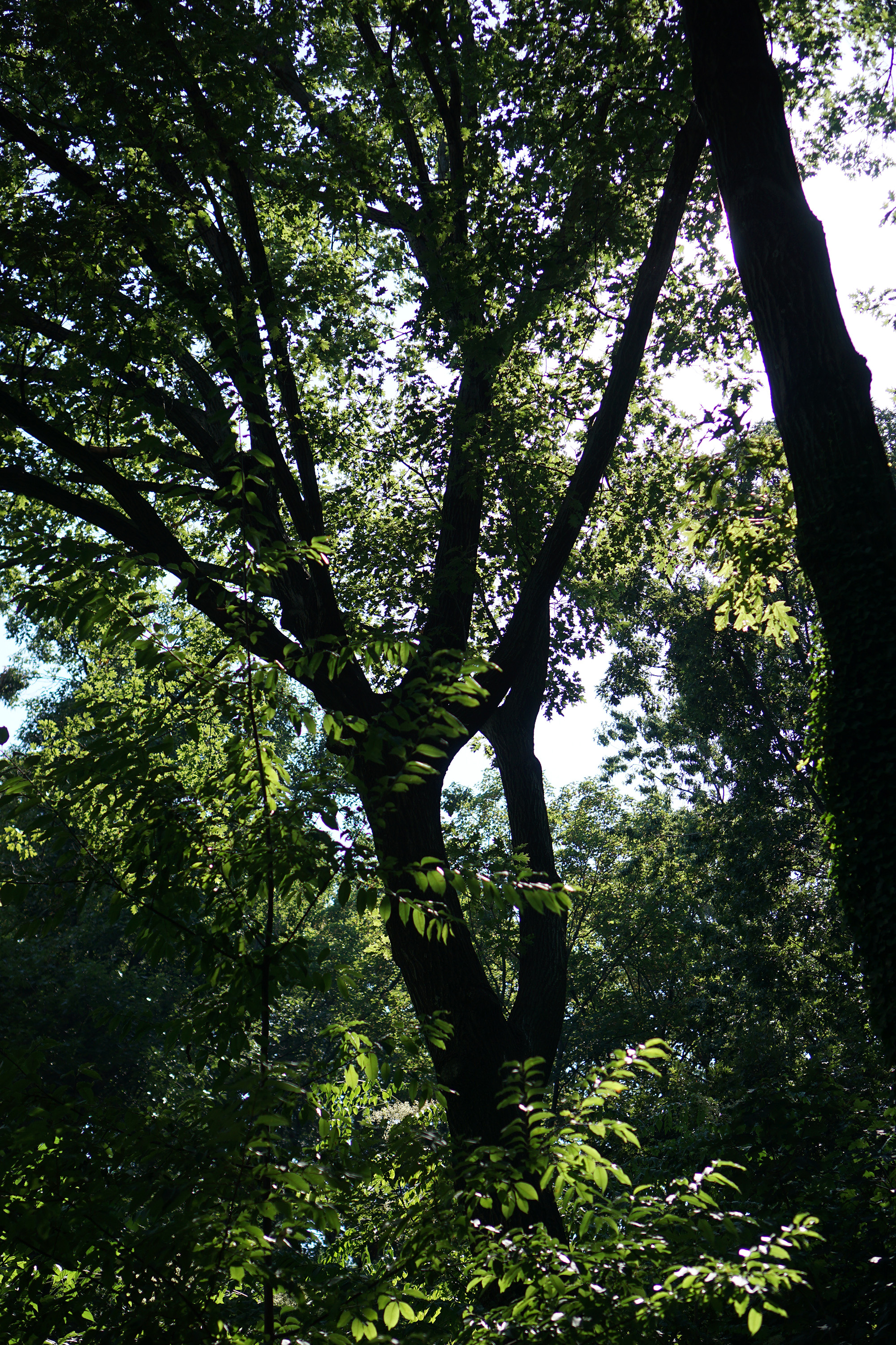 Fort Tryon Park, Washington Heights, New York City / Darker than Green