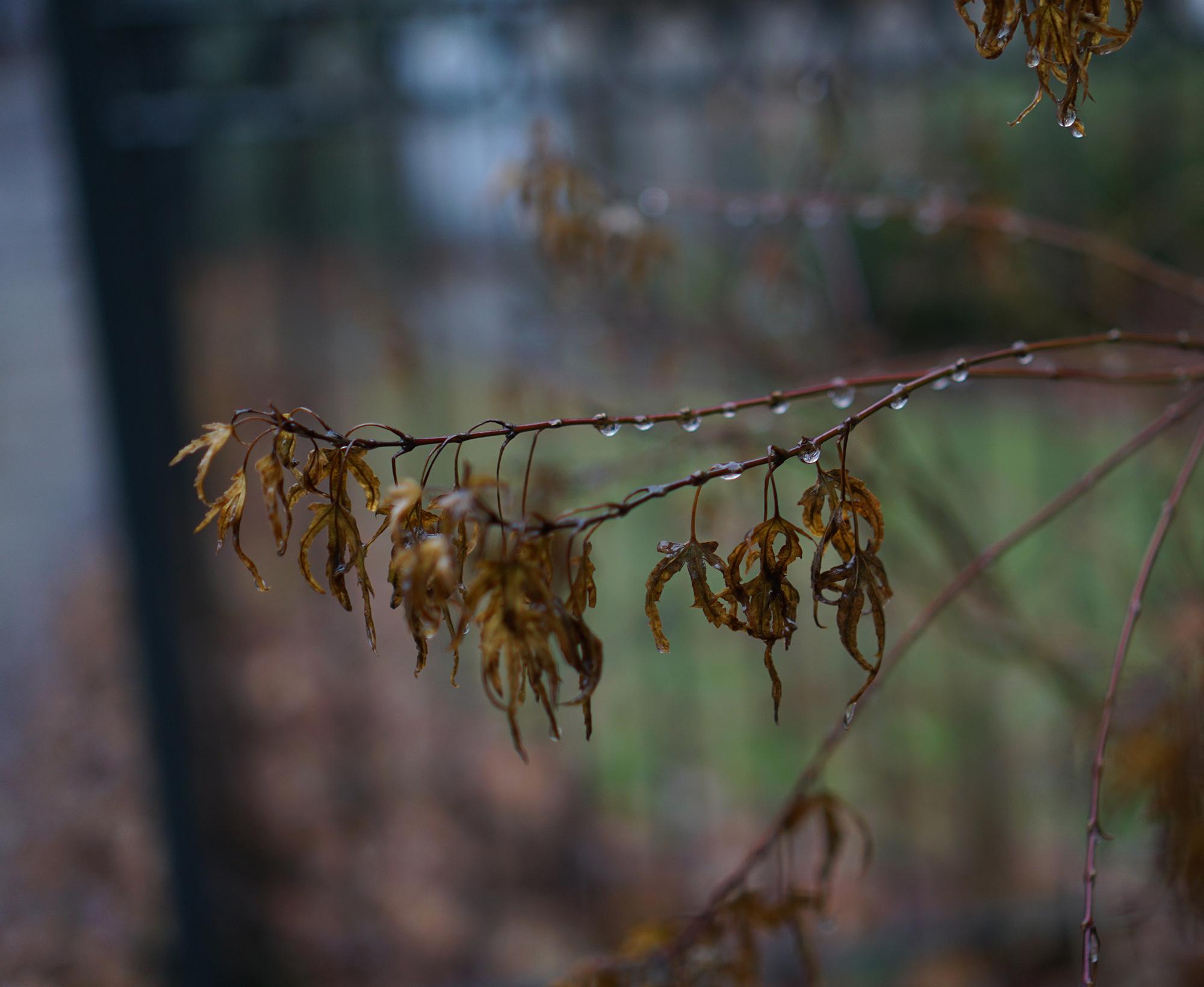 Plant in the rain, Chicago / Darker than Green