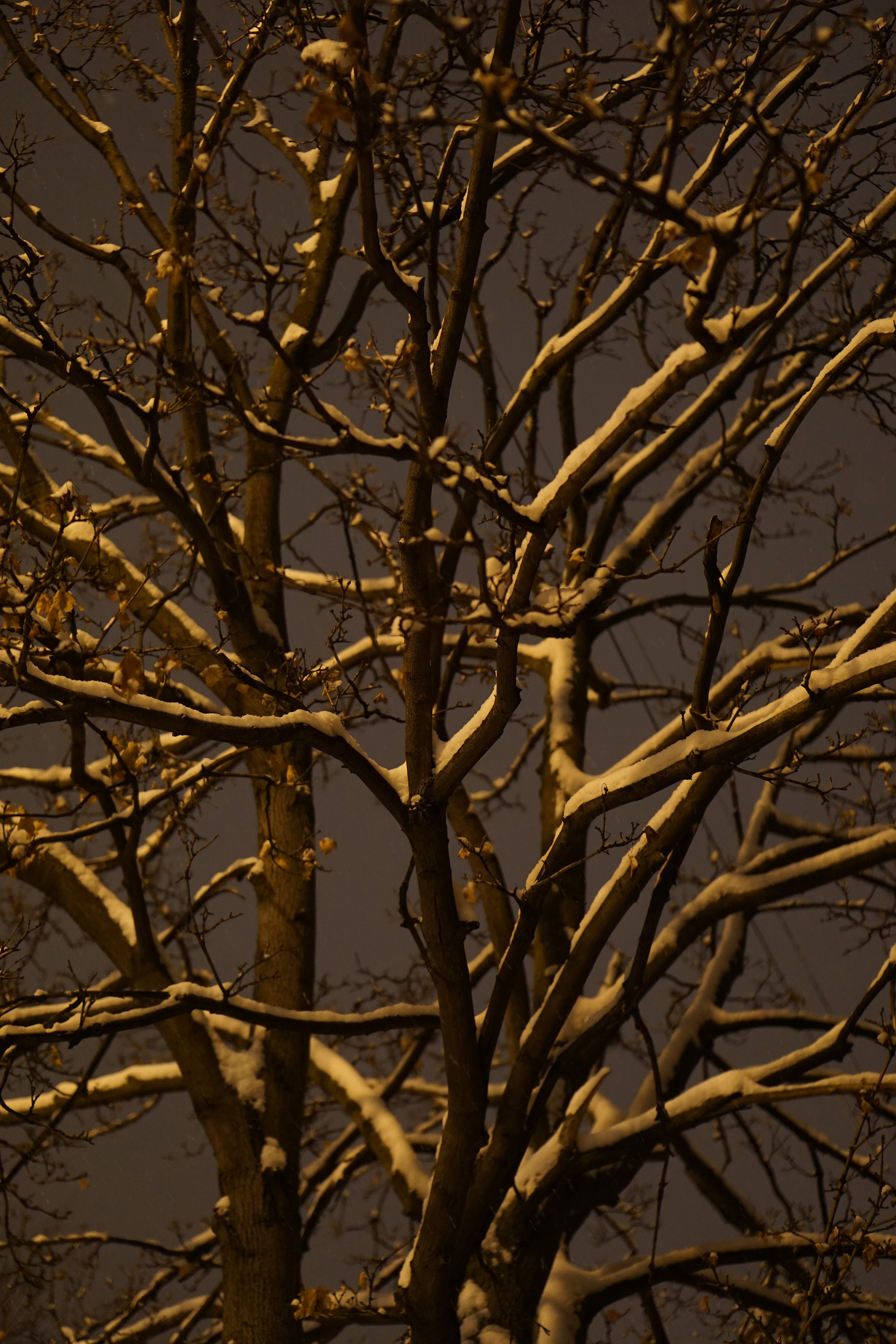 Bare tree at night after a snowstorm / Darker than Green