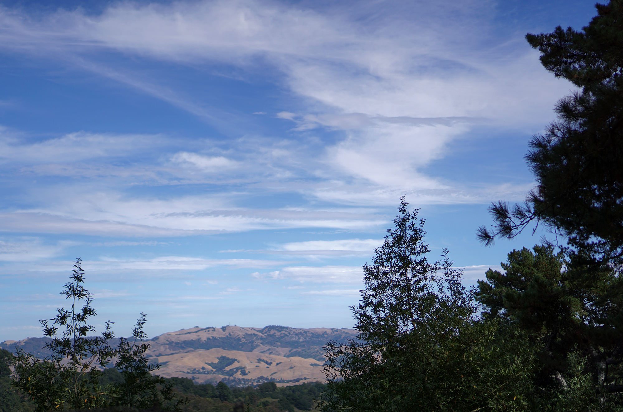 View of the mountain in Redwood Regional Park, Oakland California / Darker than Green